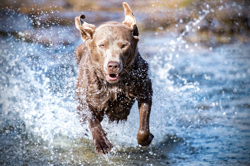 urlaub mit hund nordsee